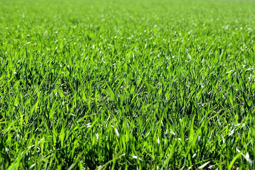 כל מה שחשוב לדעת על טיפוח דשא סינטטי